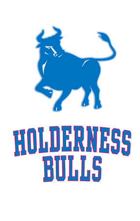 holderness-bulls